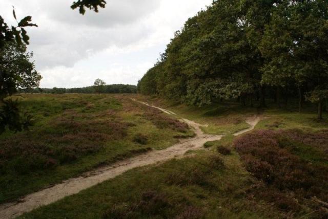 Heide van Allardsoog